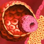 Развитие эмбрионов в матке после переноса. Что определяет результат?