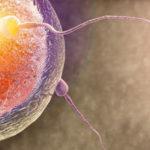 Третья неделя беременности: признаки и ощущения. Что происходит на 3 неделе?