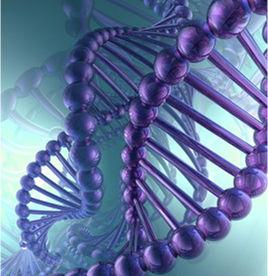 Процесс оплодотворения яйцеклетки завешается формированием генома