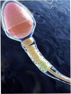 Спермограмма для ЭКО