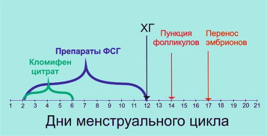 Схема короткого протокола по дням ЭКО