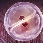 Почему не приживаются эмбрионы в матке после переноса в ЭКО?