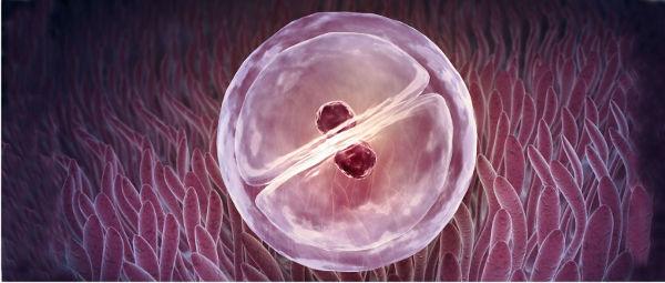 5 причин, почему не приживаются эмбрионы после переноса