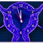 Удачная подсадка эмбрионов, эндометрий и окно имплантации