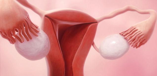 Почему болит грудь во время овуляции
