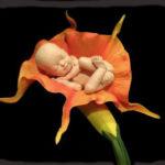 12 недель беременности: что происходит с мамой и малышом?