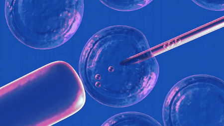 ЭКО с донорской яйцеклеткой - как происходит