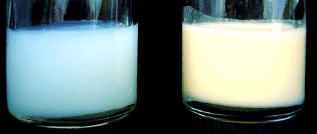 Чем отличается переднее и заднее молоко