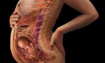 Беременность на 23 неделе развития