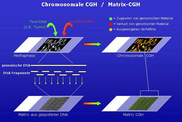 сравнительная геномная гибридизация