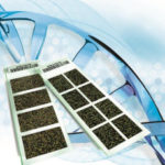 Сравнительная геномная гибридизация CGH эмбрионов