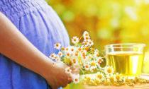 какие травяные чаи можно пить беременным