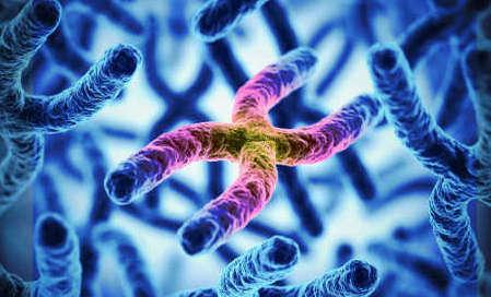 Невынашивание по генетическому фактору