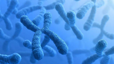 Генетический риск невынашивания беременности