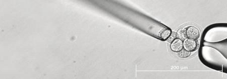 Перенос бластоцисты преимплантационный генетический скрининг как приживается