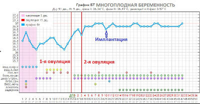График БТ при двойной овуляции