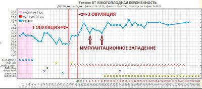 График БТ при двух овуляциях в цикле с перерывом в 3 дня