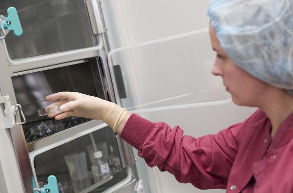 Эмбриологический протокол