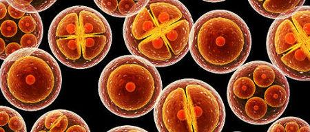 После подсадки эмбрионов как себя вести