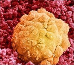 Как приживаются замороженные эмбрионы