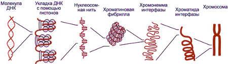 Выявление фрагментации ДНК спермограммы tunnel