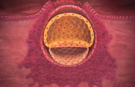 Что такое имплантация эмбриона