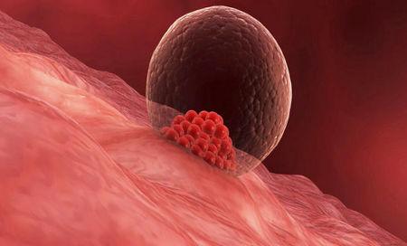 Сколько длится имплантация эмбриона в матку симптомы