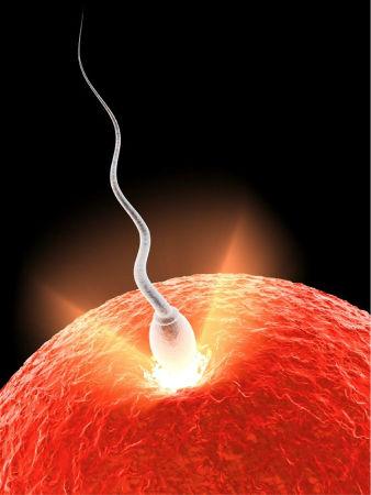 Имплантация эмбриона на какой день после зачатия