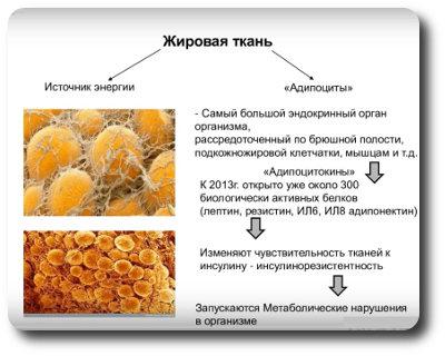 Патогенез инсулинорезистентности