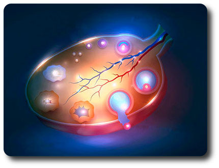 Овариальный резерв яичников - что это такое